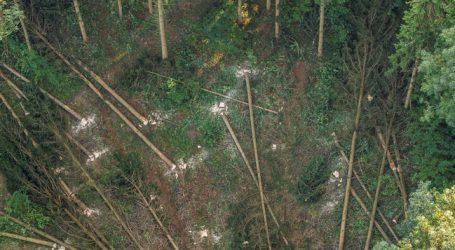 EVN macht aus Waldviertler Käferholz Wärme