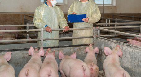 Afrikanische Schweinepest: VÖS mahnt zur Wachsamkeit