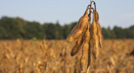 Anteil an US-Sojabohnen in Europa steigt stark