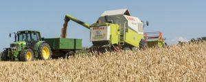 AMA bestätigt niedrige Getreideerträge