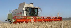 Getreideernte-Schätzung nach unten korrigiert
