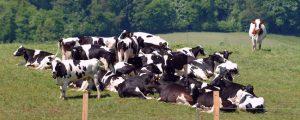 Europaweite Milchanlieferung steigt leicht