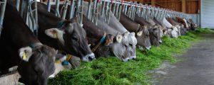 Milchpreise konnten im September zulegen