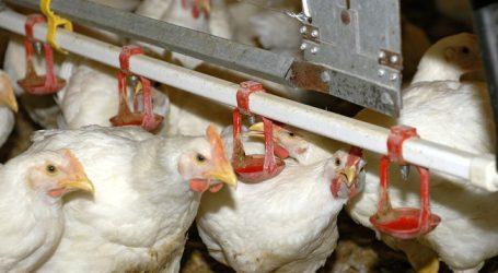 EU-Parlament kritisiert europäische Geflügelwirtschaft