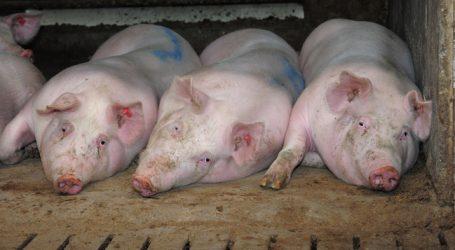 Fleischproduktion weltweit erneut gestiegen
