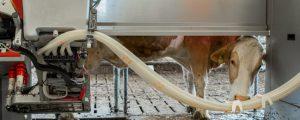 Rohmilchpreise in Deutschland steigen
