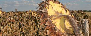 Russland will syrische Landwirtschaft wieder aufbauen