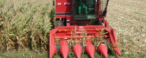 Mais  und Soja in Oberösterreich besser als erhofft