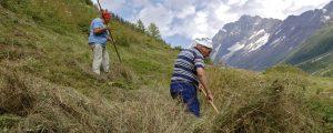 SPÖ will Agrarförderungen massiv umschichten
