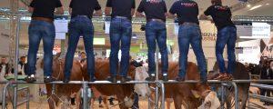 Rinderzucht in Hannover auf der Suche nach Türkei-Alternativen