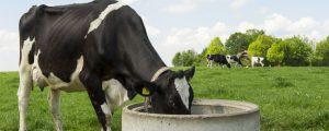 Neuseeländische Milchproduktion auf Rekordhöhe