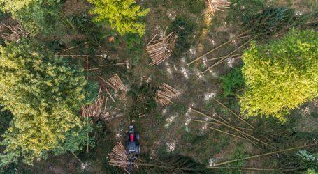 Von Baumsterben betroffene Fläche verdoppelt