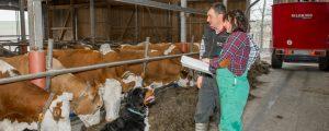 Rinderzucht: Big Data soll praktischen Nutzen bringen