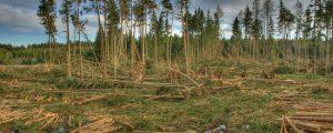 Föhnsturm schädigte 1.300 Hektar Wald in Tirol
