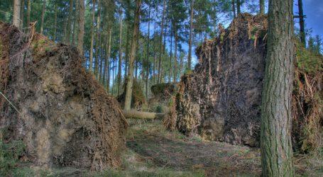 """""""Waldeigentümer können Schäden nicht alleine stemmen"""""""