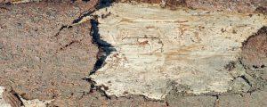 Schadholz-Lagerung auf Beihilfe-Flächen verlängert