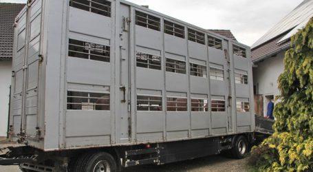 """""""Tiere leiden unter langen Transporten"""""""