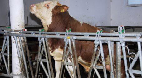 Marktprognose 2030: Fleisch schlechter, Milch besser