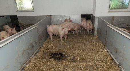 Afrikanische Schweinepest weiter großes Thema
