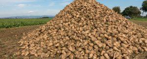 Agrana setzt auf Innovationen bei Zucker und Stärke