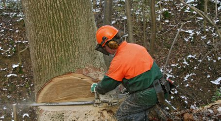 15 Tote bei Waldarbeiten alleine in der Steiermark