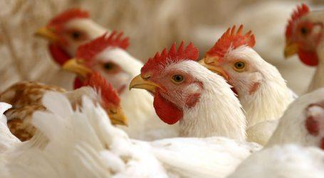 Wintertagung: Geflügelwirtschaft trifft sich in Hatzendorf