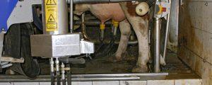 Brexit Unsicherheitsfaktor für Milchmarkt