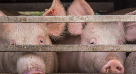 Südkorea nimmt mehr europäisches Schweinefleisch