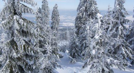 Pro Jahr 3.400 Hektar mehr an Wald