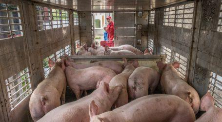 Tiertransporte: EU-Parlament wünscht sich schärfere Kontrollen