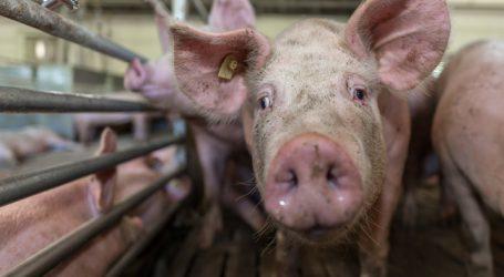 Deutschland führt staatliches Tierwohl-Label ein
