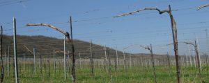 Burgenland und Slowakei wollen Pflanzenschutz optimieren