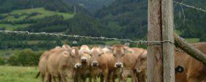 Zahl der Milchbauern in der Schweiz auf Tiefststand