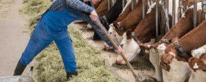"""Steuerreform: Reisecker will """"spürbare Entlastung für Bauern"""""""