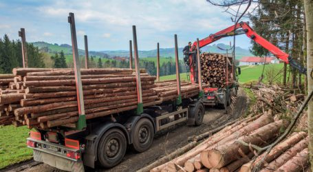 Ausnahmen für Holztransporte verlängert