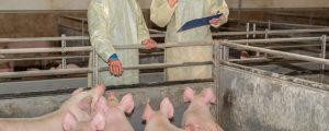 141 Mio. Euro zur Bekämpfung von Tierseuchen