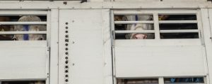 Transporteinschränkungen in Türkei und Libanon?