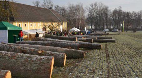 OÖ: Eiche dominierte Angebot bei Wertholzsubmission