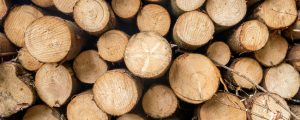 Überangebot an Fichten belastet Holzmarkt
