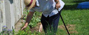 """Verein """"Green Care"""" will mit Gemeinden zusammenarbeiten"""