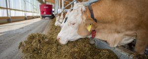 Milchpreisentwicklung schwierig abzuschätzen