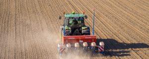 Mais bleibt Nummer Eins in Oberösterreich
