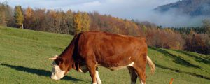 Tirol stellt Versicherungsschutz für Almen vor