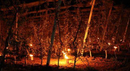 Steirische Obstbauern beklagen erste Frostschäden
