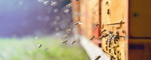 Lagerhäuser erweitern Bienenmietservice