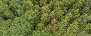 Neue Wege zum Waldumbau nach Borkenkäferbefall
