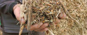 Niederösterreich legt Biomasseförderungsgesetz vor