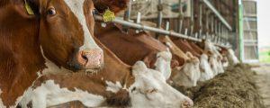 Milchanlieferung pro Betrieb steigt rasch