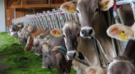 Schweizer fragen Bauern zu Hitzestress bei Milchkühen