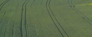 Flächenbilanz: Rübe, Sommergerste und Weizen große Verlierer